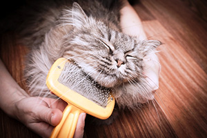 Best Ways To Get Rid Of Fleas On Your Cats
